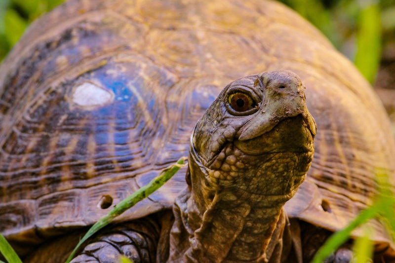 The Ex-Files: Curtis the Turtle – A Cautionary Tail